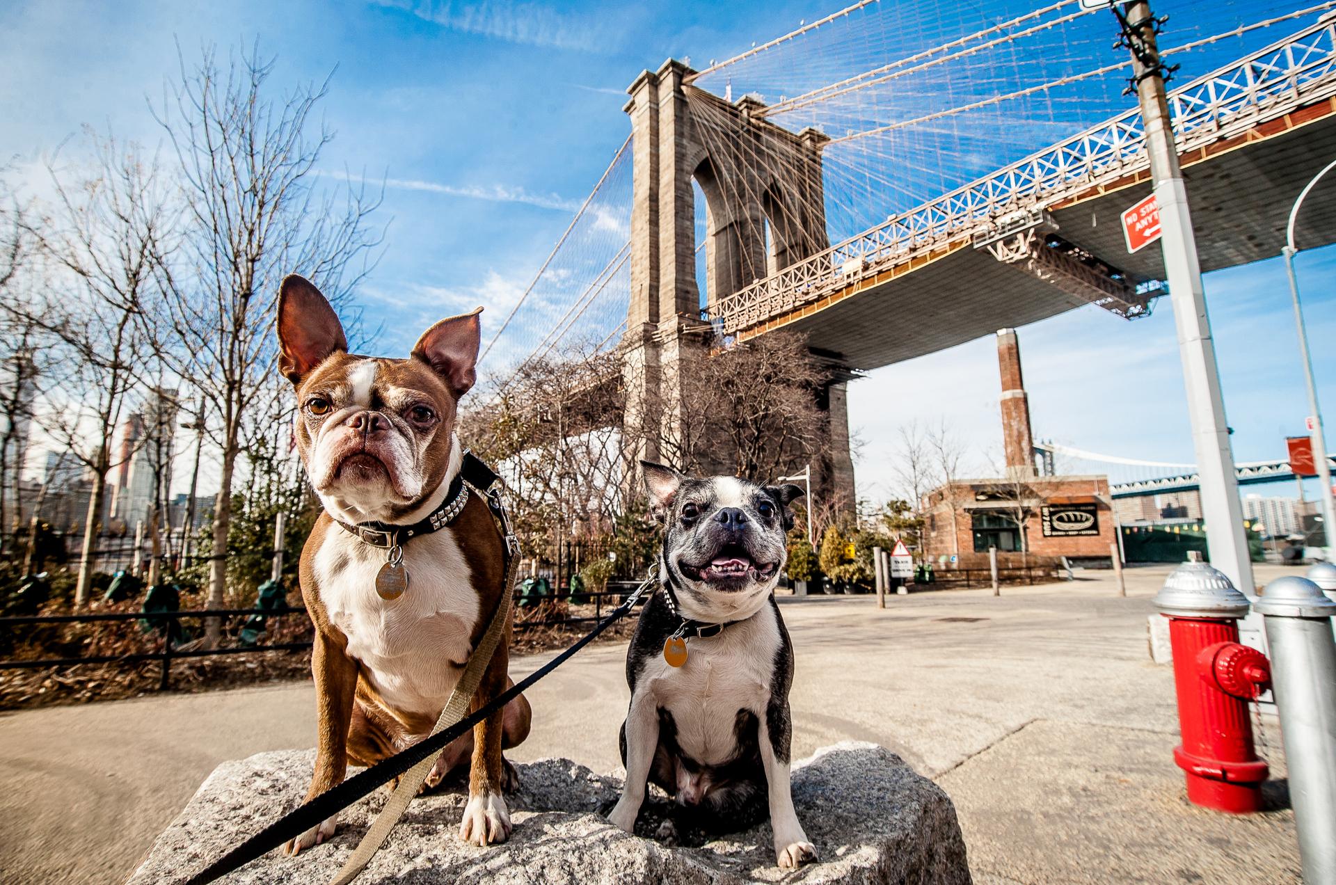 dogs-nyc.jpg