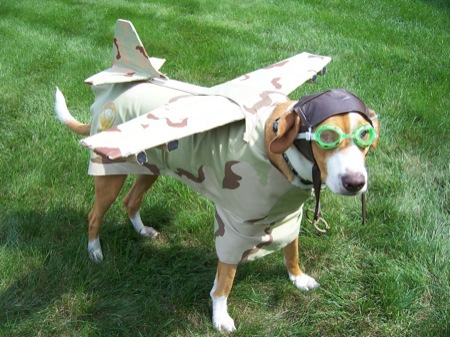 dog-dressed-as-pilot-plane.jpg