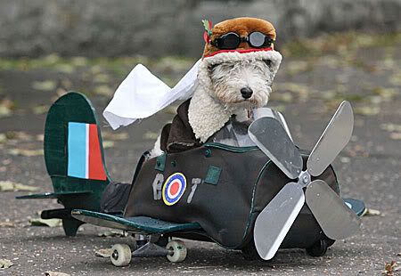 cartoon-dog-with-pilot-goggles_1046040.jpg