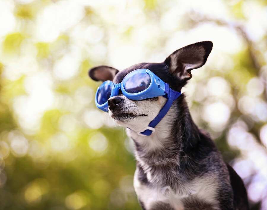 dog-goggles.jpg