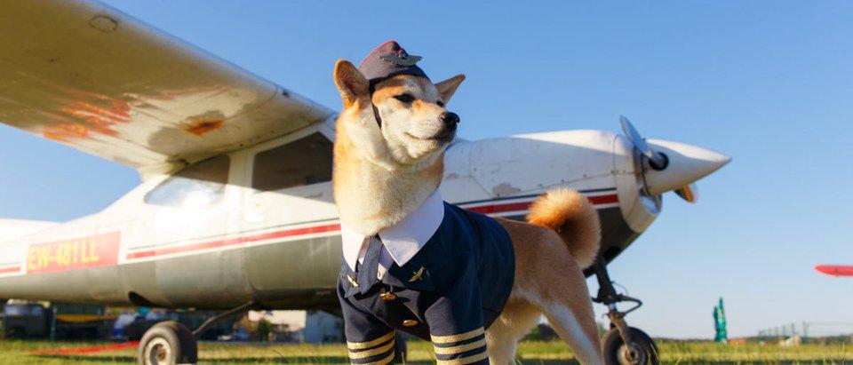 Dog-Plane-Shutterstock-e1554985643753.jpg