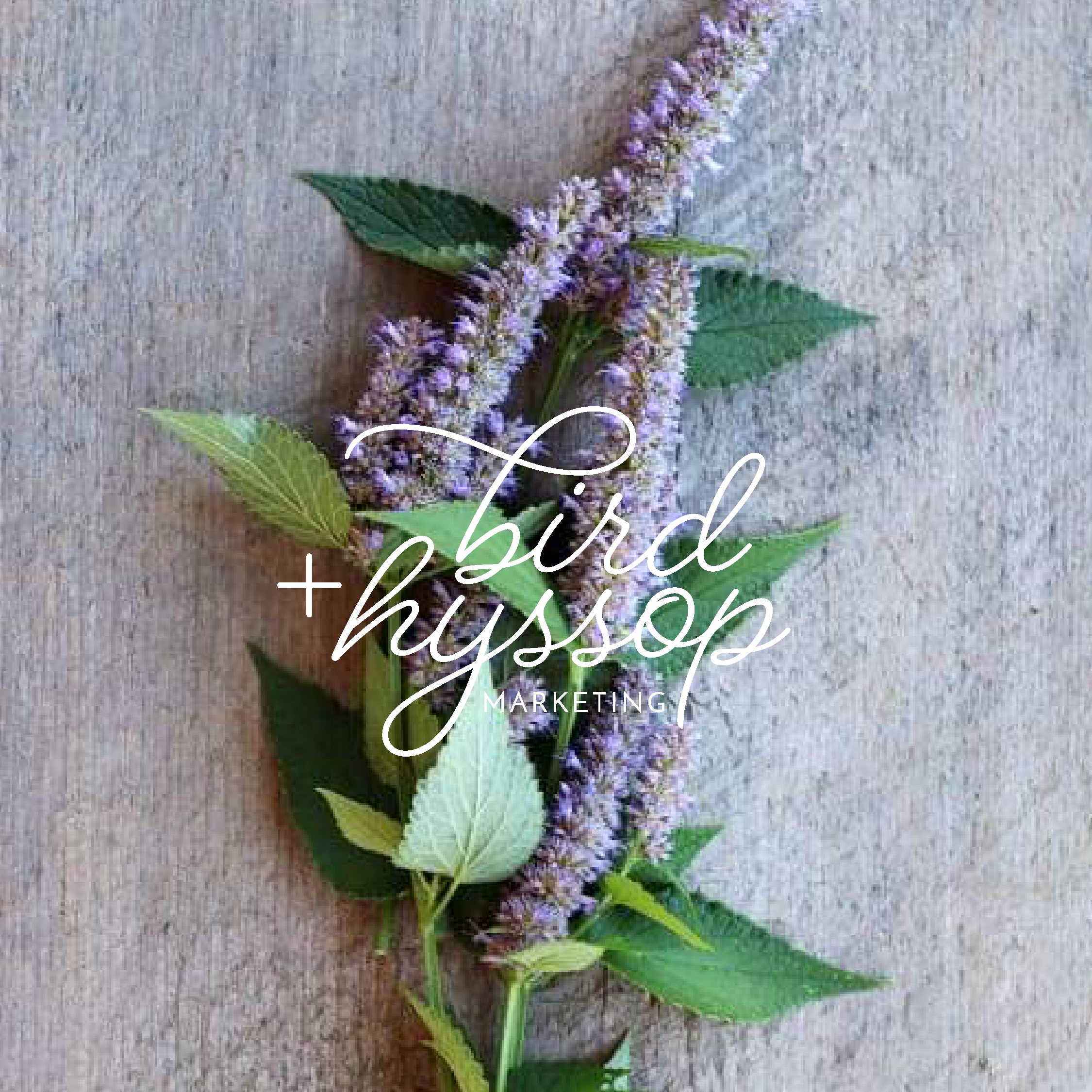 bird + hyssop Houston Marketing and StoryBrand Coach brand and logo design by Kindly by Kelsea