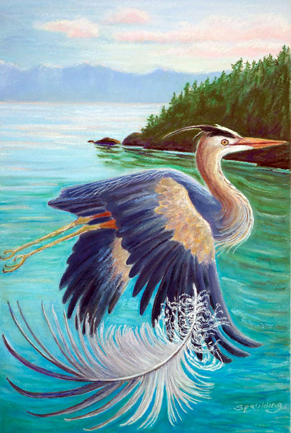 "Heron Feather   Pastel  12"" x 18"""
