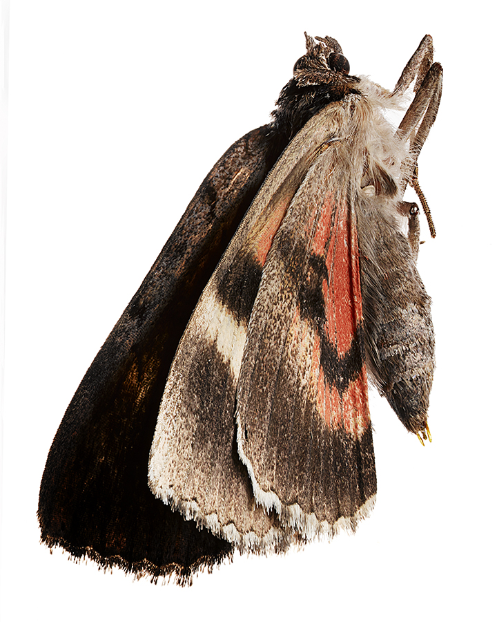 Moth_FF.jpg