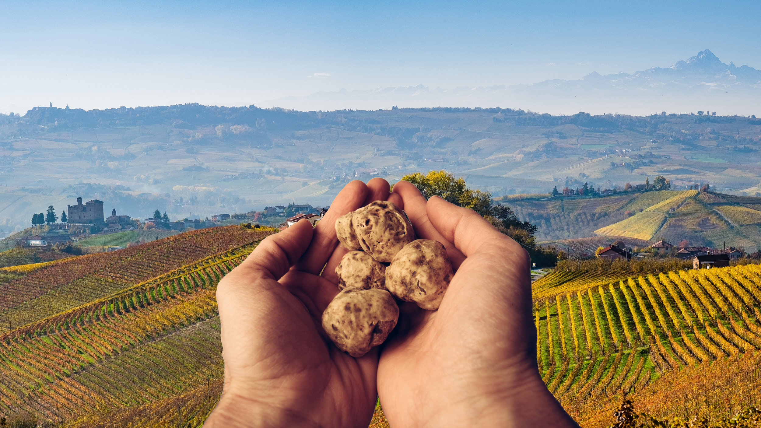 truffles.jpeg
