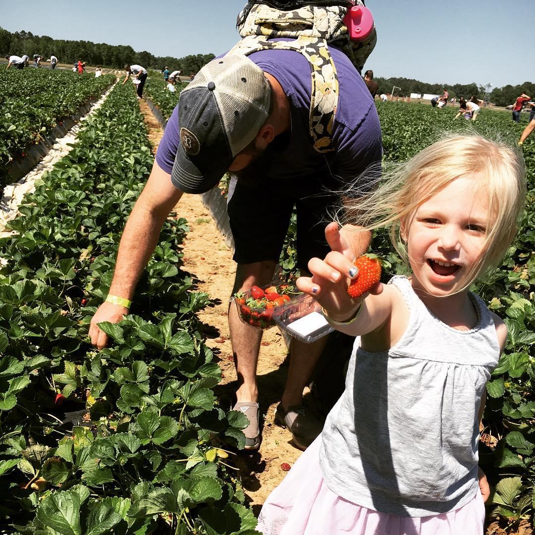 pickingstrawberries2.jpg
