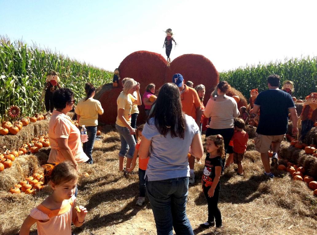 PumpkinPatch214703.jpg