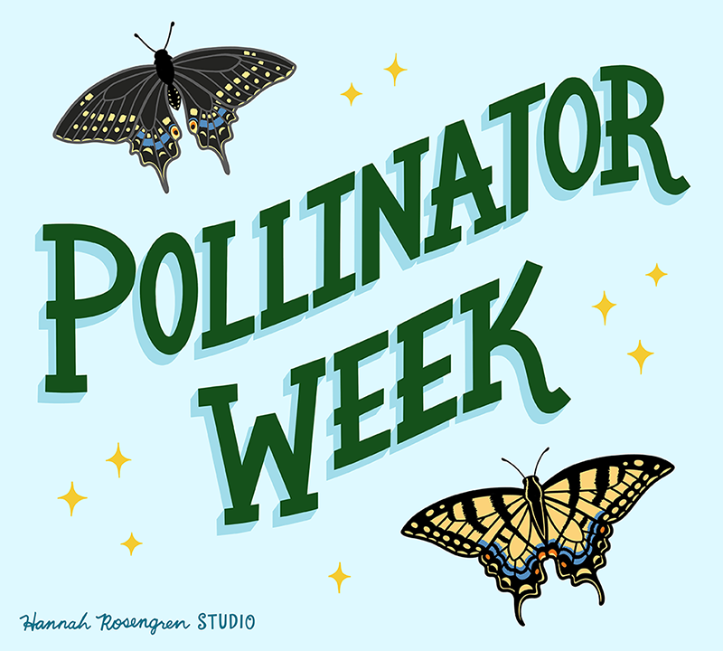 Pollinator Week Lettering 2019_WEB RES 72_BLOG.png