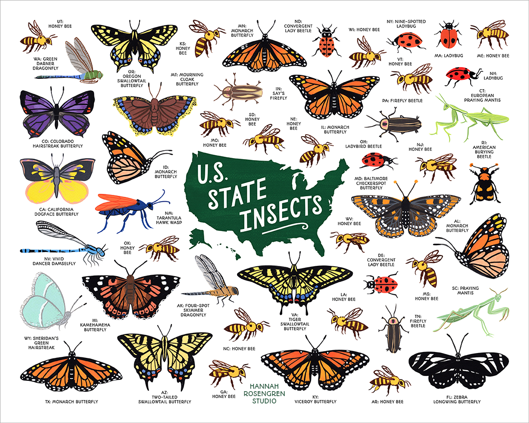 State Insects WEB RES 72.png