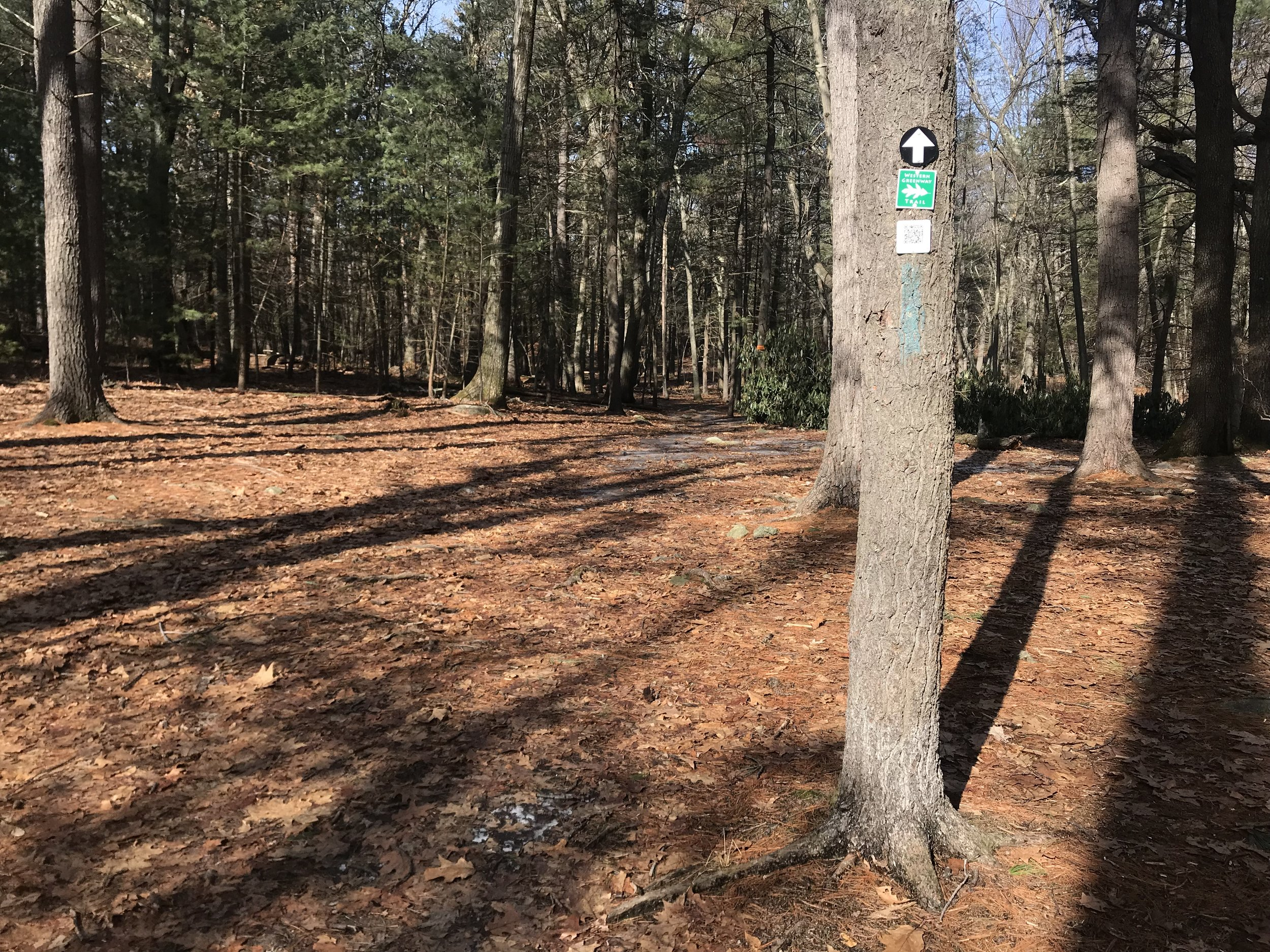 - Hikers on the Western Greenway, a regional trail system, pass through the woods.