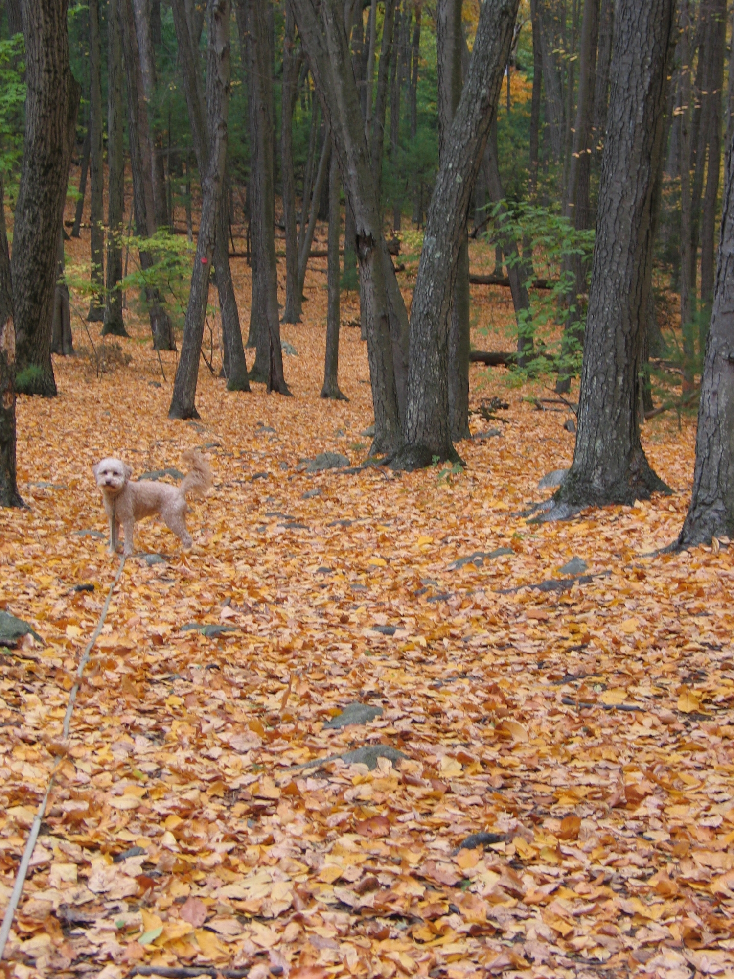 - People love to walk the woods -many with their dogs. They often become unofficial stewards of the trails: removing garbage, moving fallen branches, reporting any problems they see while walking. The woods are cleaner and safer due to these daily walkers.