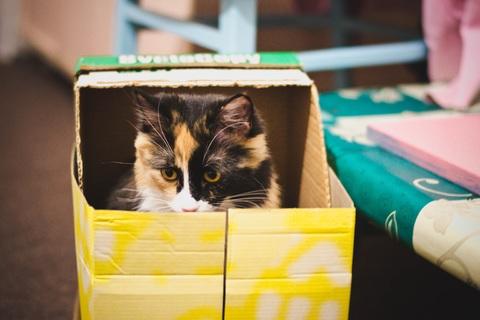 green-kitten-cat-color-mammal-box-903844-pxhere.com.jpg