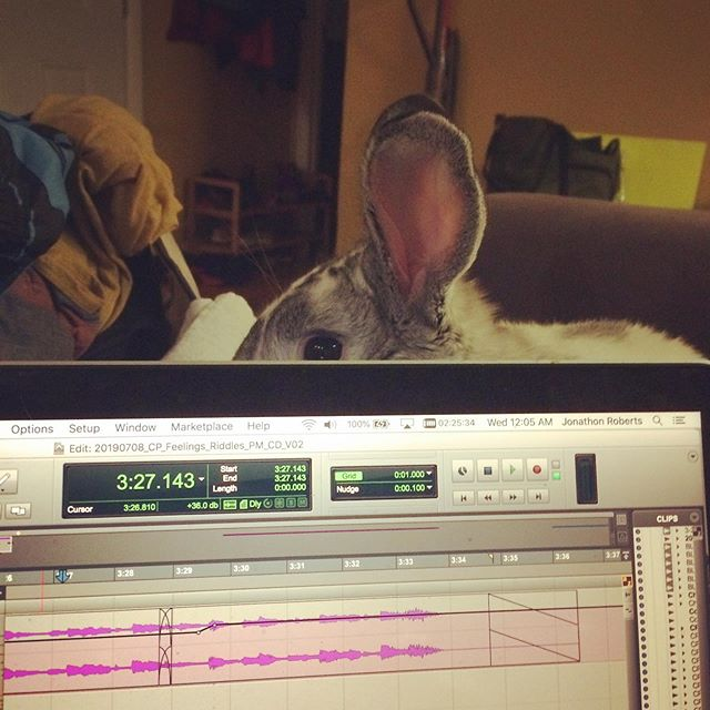 Behind every great protools session is a rabbit. #bunny #mixing #protools
