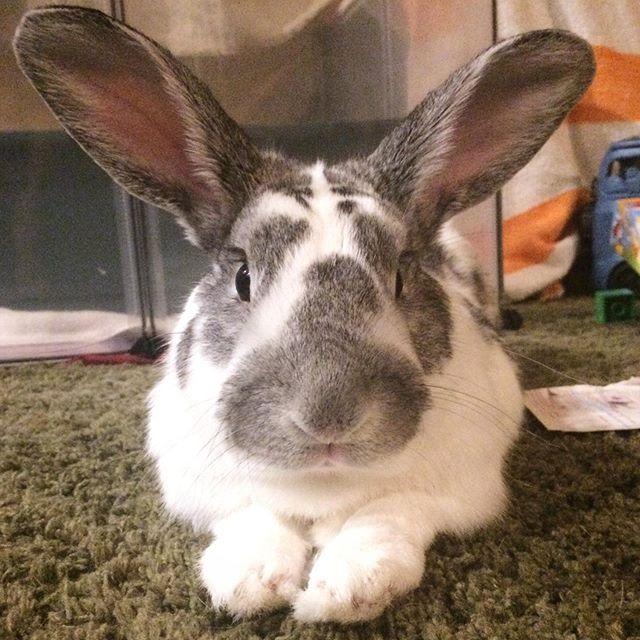 Meet Mars Mission.  #bunny