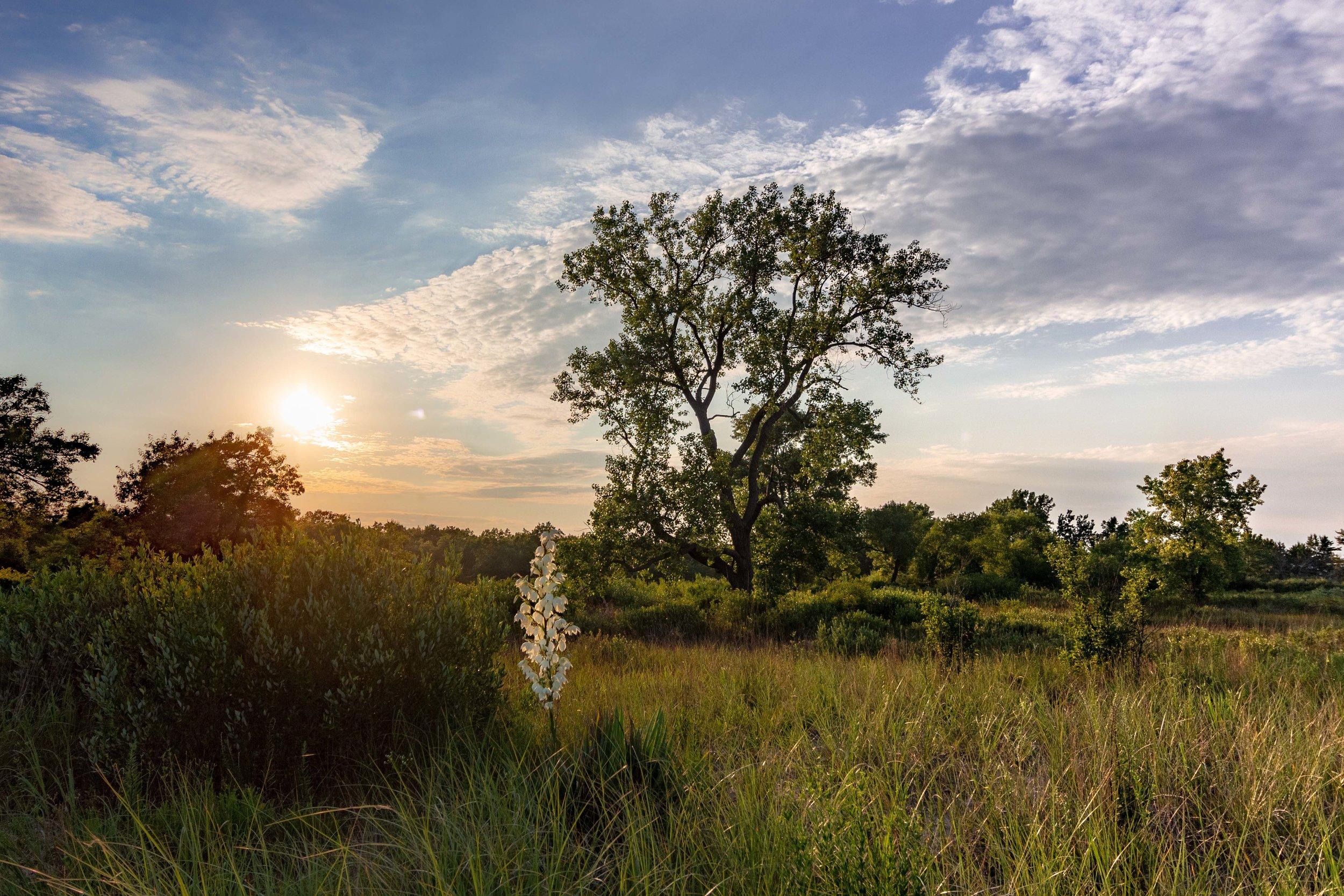 IllinoisBeachStatePark_Landscape-.jpg