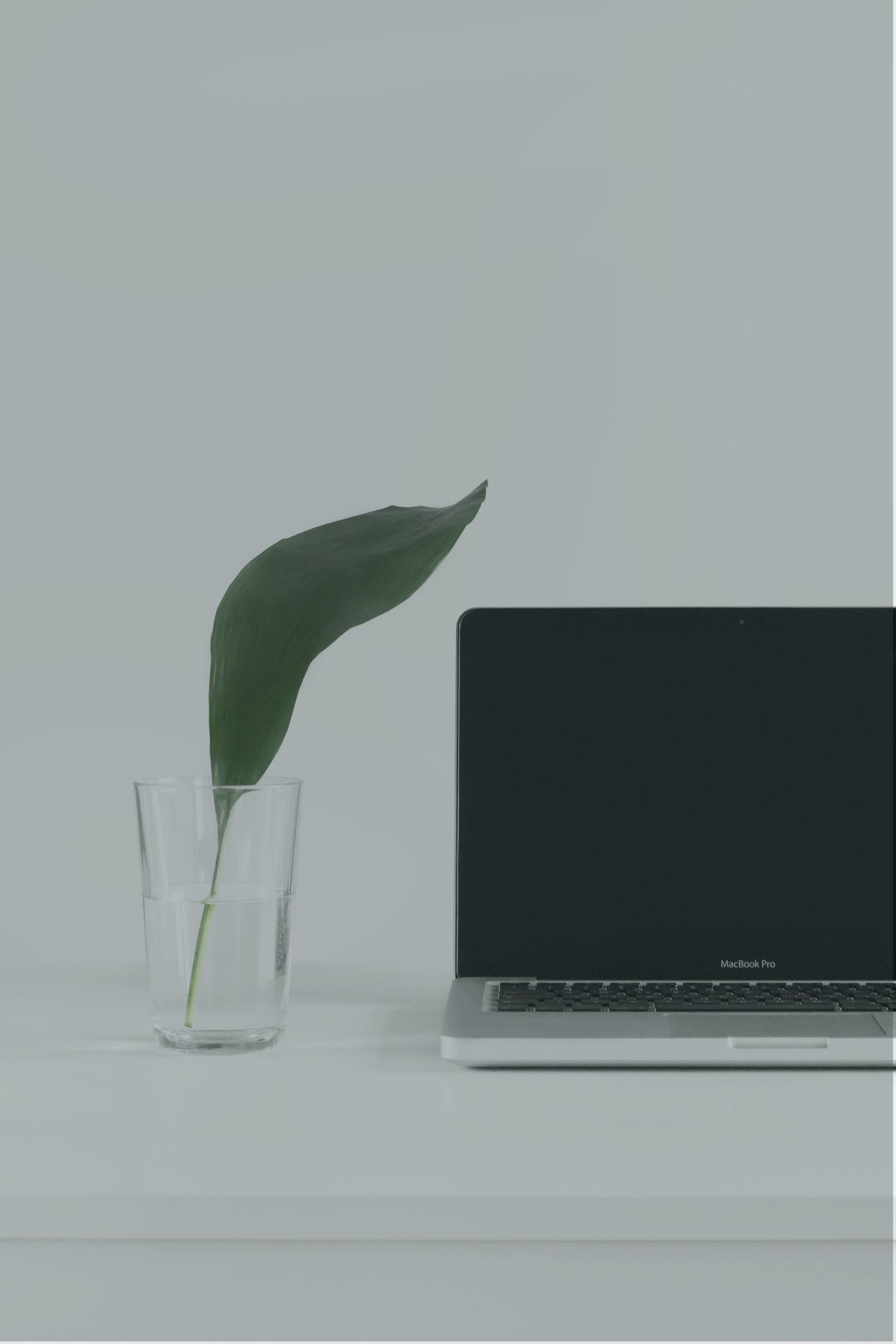 Laptop_leaf_overlay_1500.png