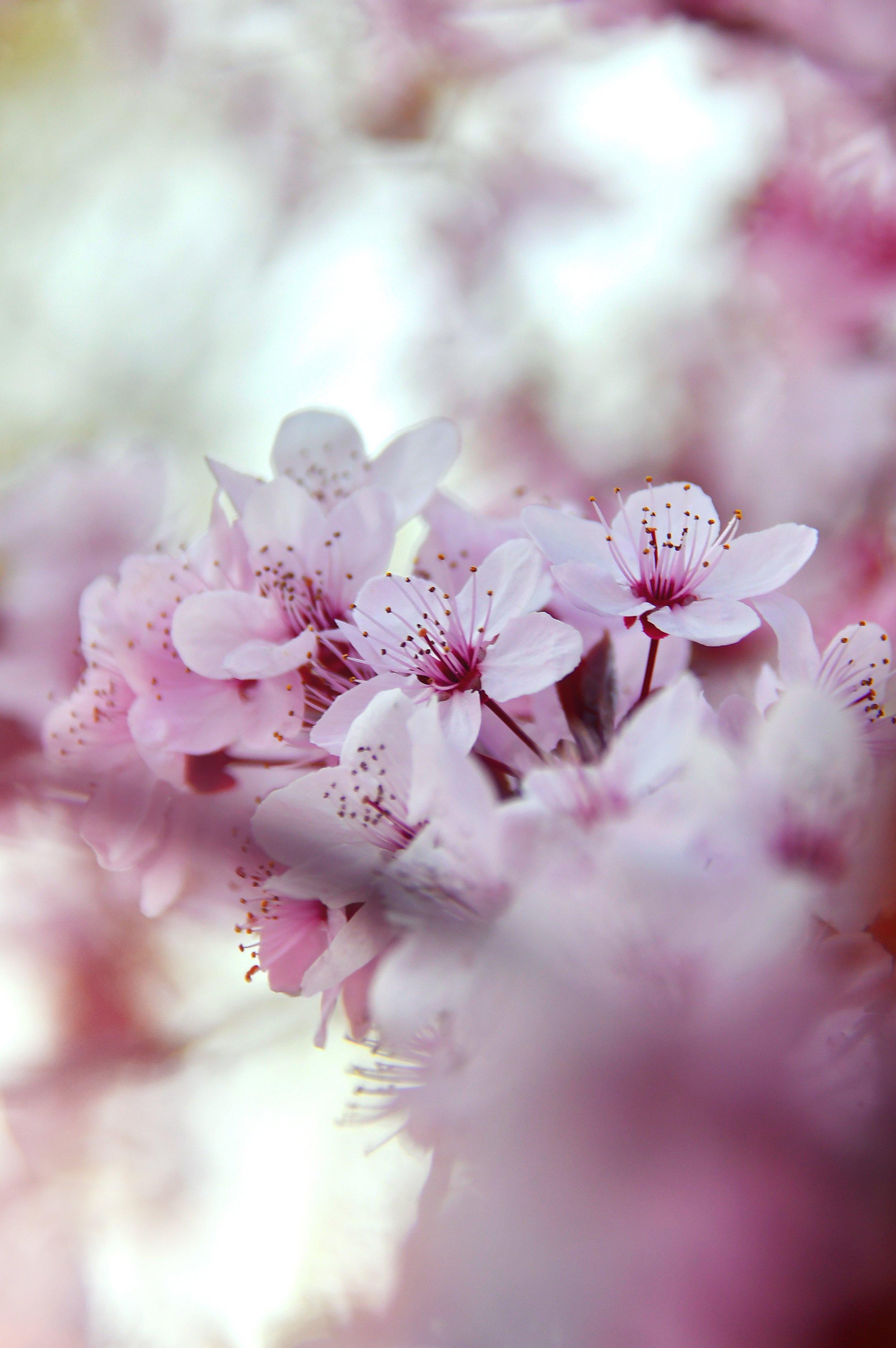 beautiful-beautiful-flowers-blooming-2080436.jpg