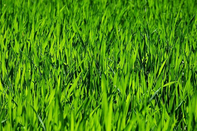 grass-3336700_640.jpg