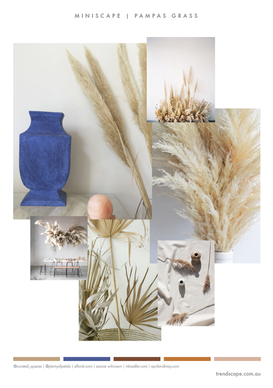 trendscape_Pampas Grass.jpg