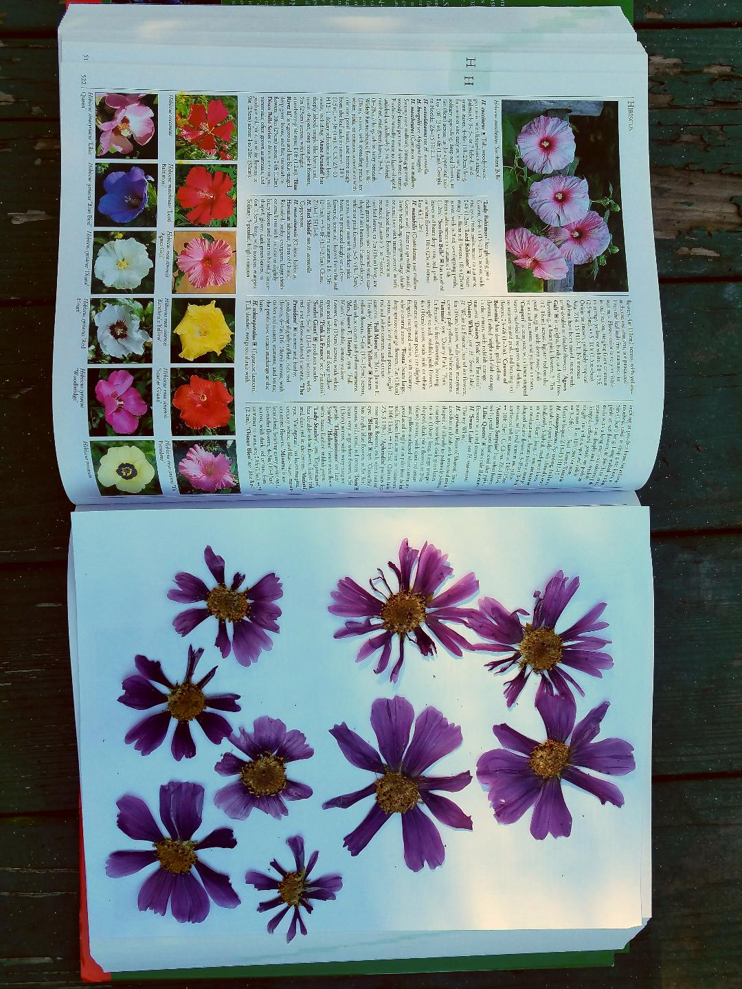 DIY pressed flowers3 me.jpg