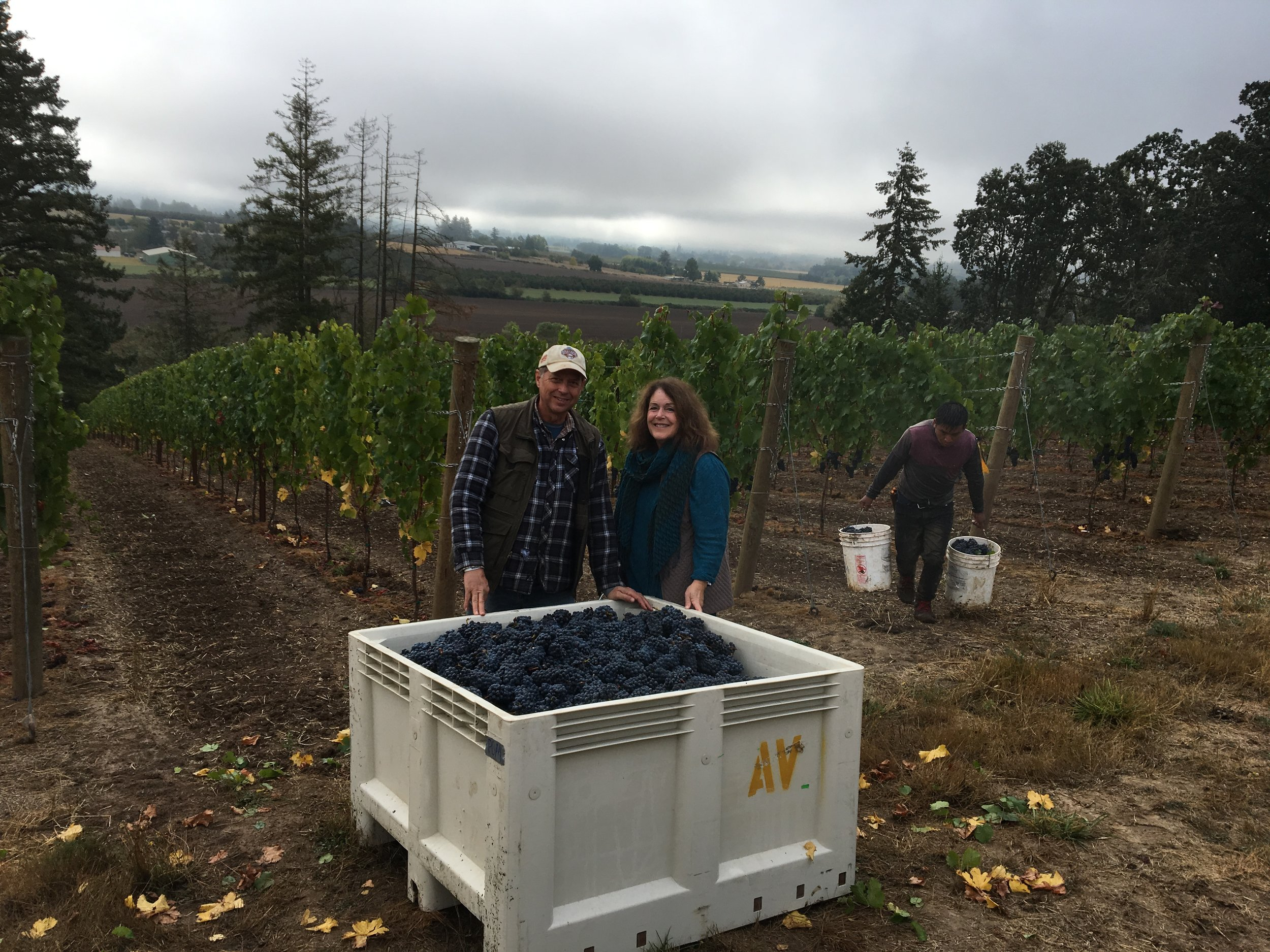 Stewart Vineyard - Stewart Vineyard is a family-owned vineyard dedicated to growing high-quality grapes. The 27-acre property rises from the Chehalem Valley floor in the Ribbon Ridge  AVA northwest of Newberg, Oregon. The vineyard features a variety of Pinot Noir clones and Chardonnay on rootstock grown for  varied and fertile soil that has not been cultivated for over 100 years. Sustainable farming practices recognize the importance of terroir and the health and quality of the soil to the final product. Stewart Vineyard is seeking to verify it's sustainability practices through the LIVE certification process. We are looking forward to developing future blocks of fruit on the site.