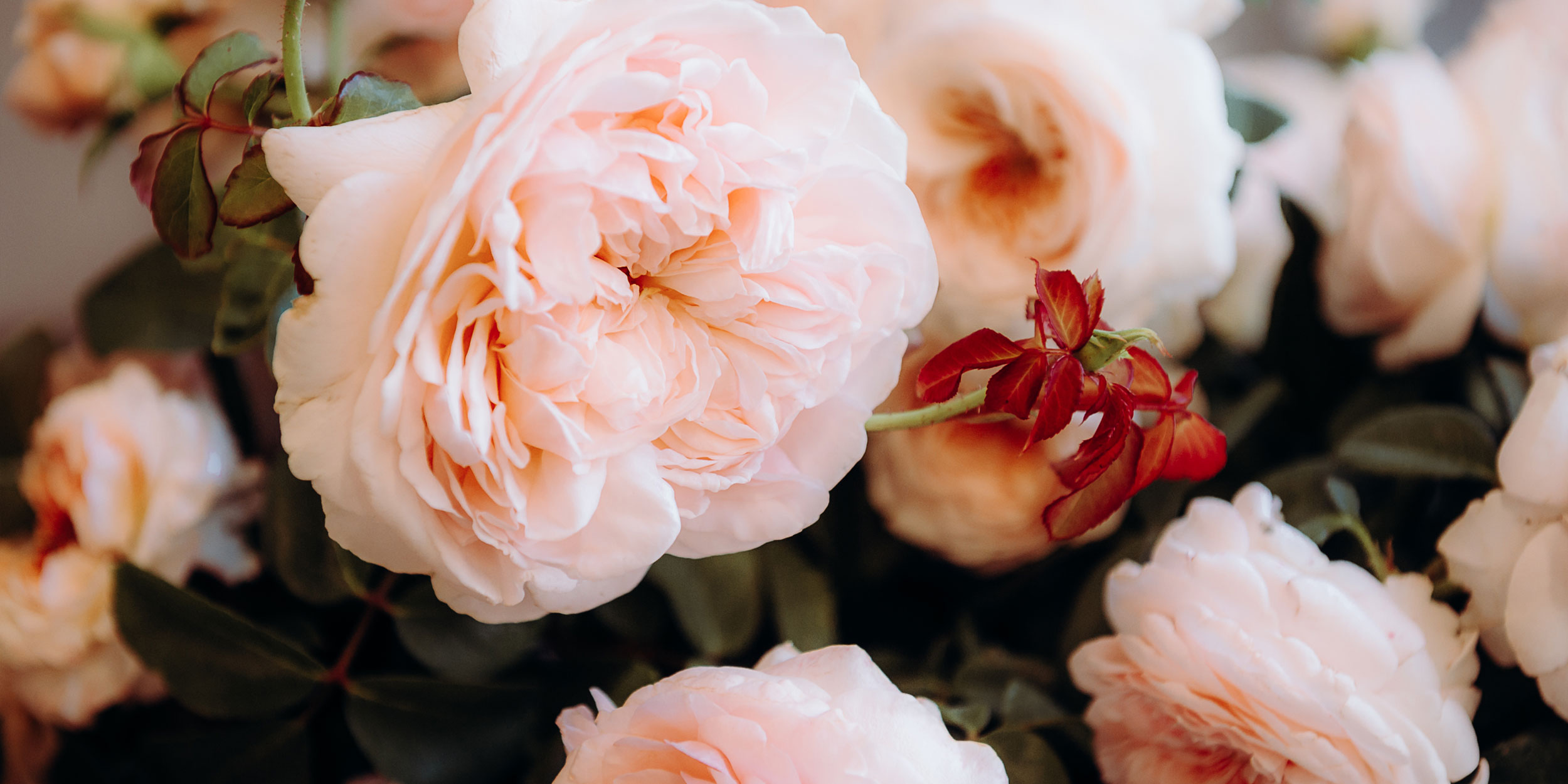 L_Flowers012.jpg