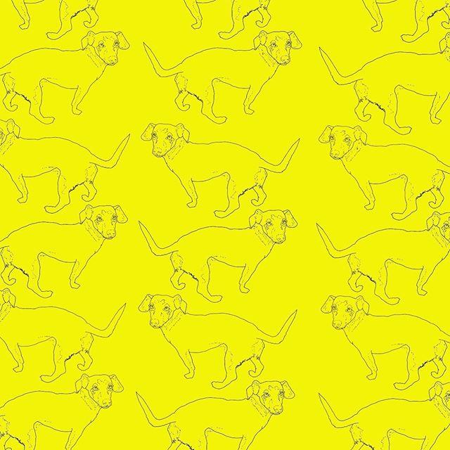 This is what happens when I watch your dog. #hotdogwallpaper . . . . . #illustration #instaart #petportrait #portraits #weinerdog #hotdog #yellow #wallpaper #og #linedrawing #inktober #dailypractice #sketch