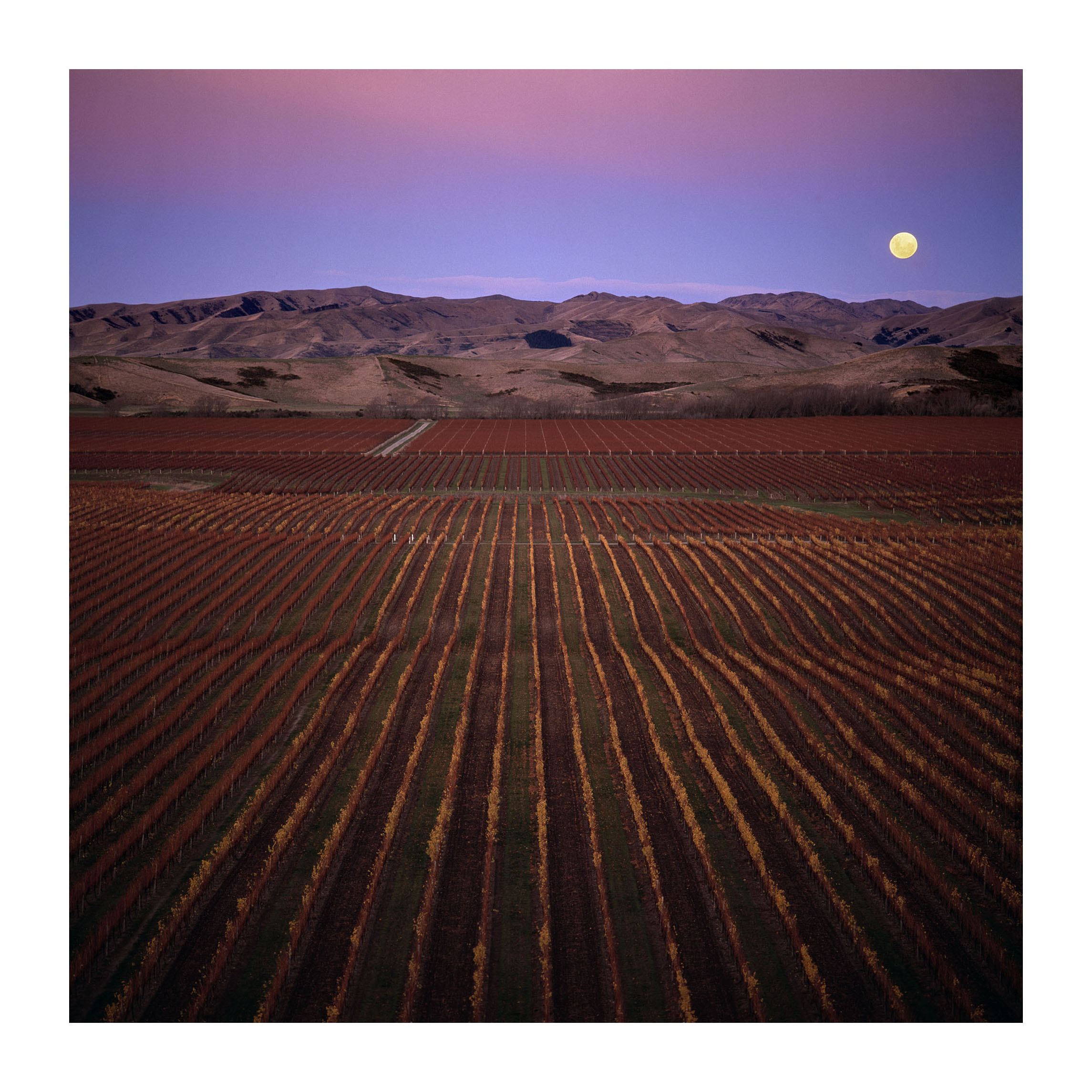 Moonrise over Brancott JPG.jpg