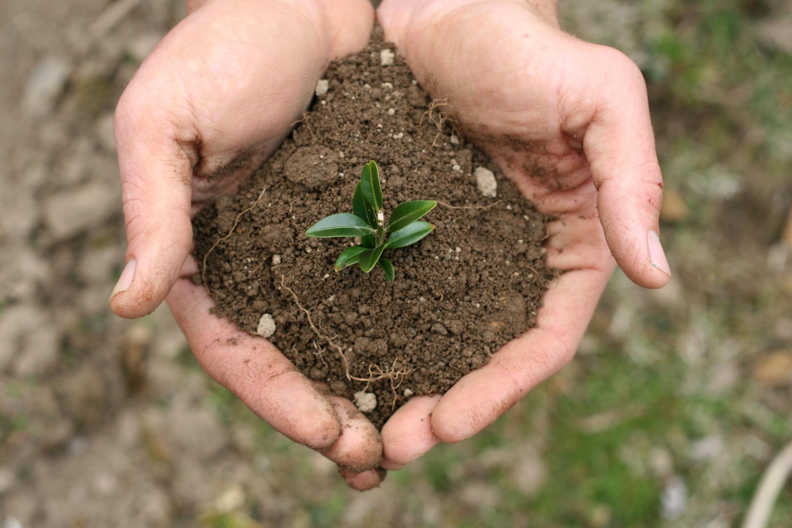 Hands-holding-soil.jpg