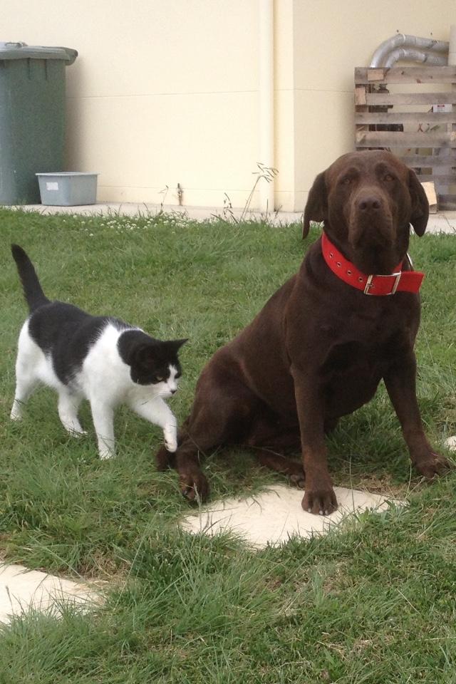 Hugo and Sally