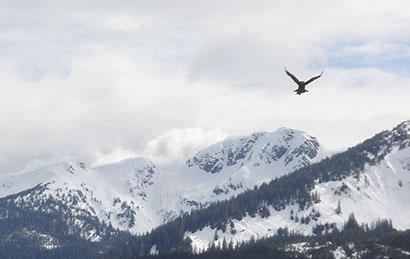 Alaska_Vogel1.jpg