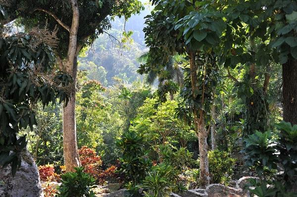 Kuba_Vegetation.jpg