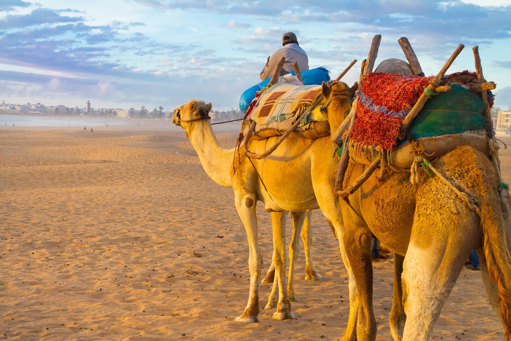 Kamel_Karawane_Marokko_Fotolia_96748996_XL.jpg