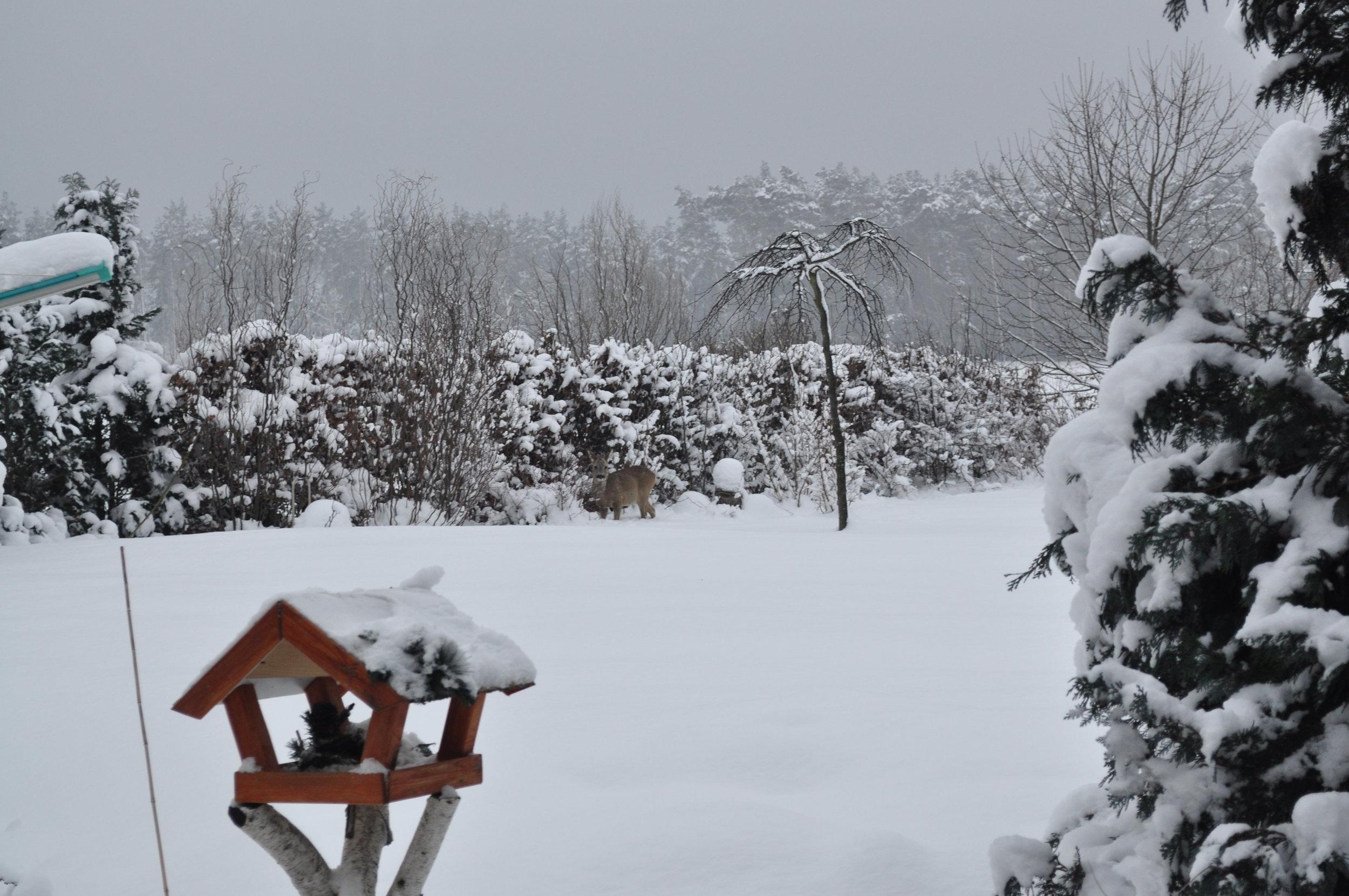 Weihnachten mit Schnee ?