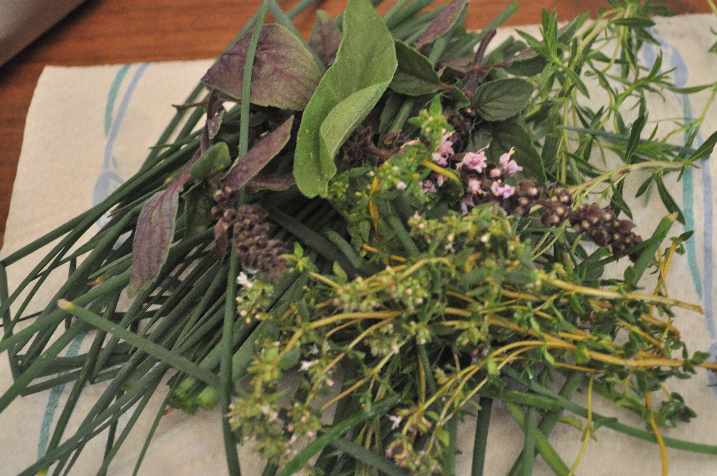 Frisch auf den Tisch! - Kräuter, Salate & Co und ein leckeres Vinaigrette-Rezept
