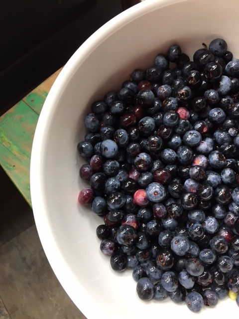 blueberry BH pic.JPG