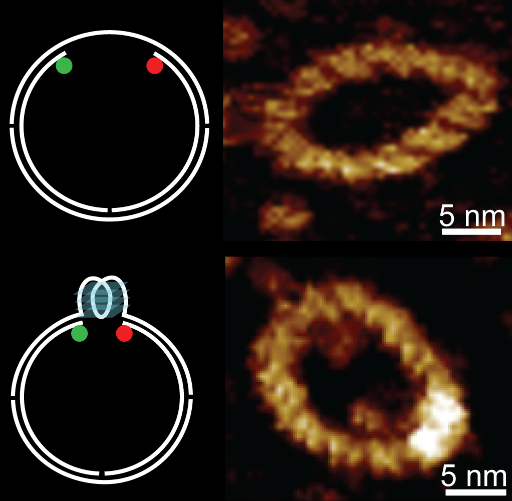 Real time determination of quadruplex formation in constrained DNA at double helical resolution