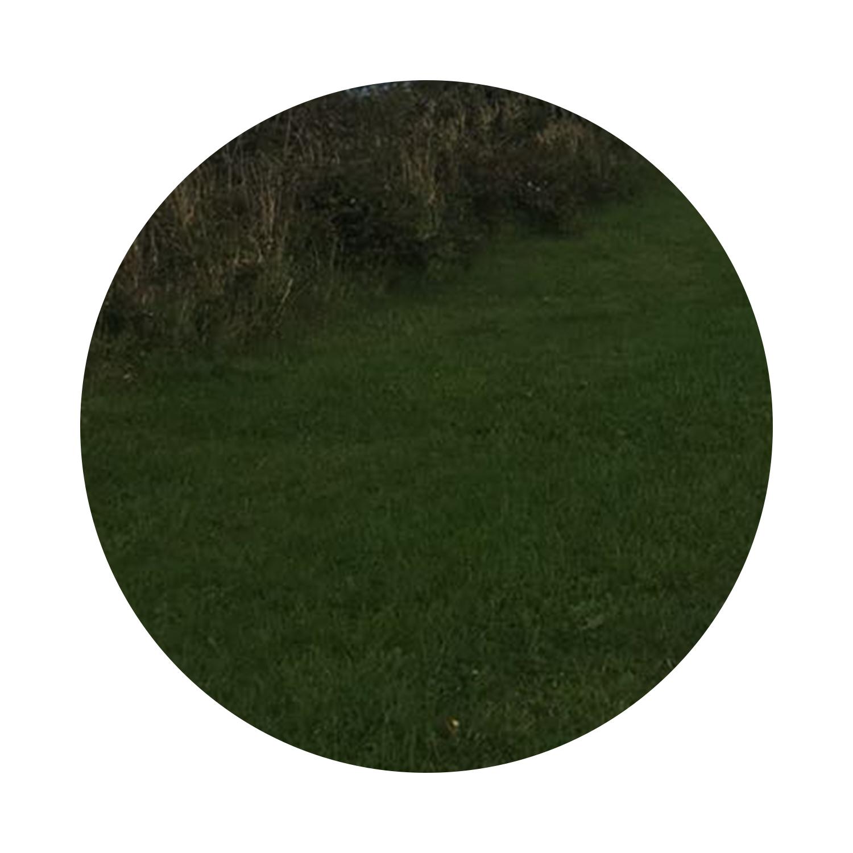 AW-interior-design-grass.jpg