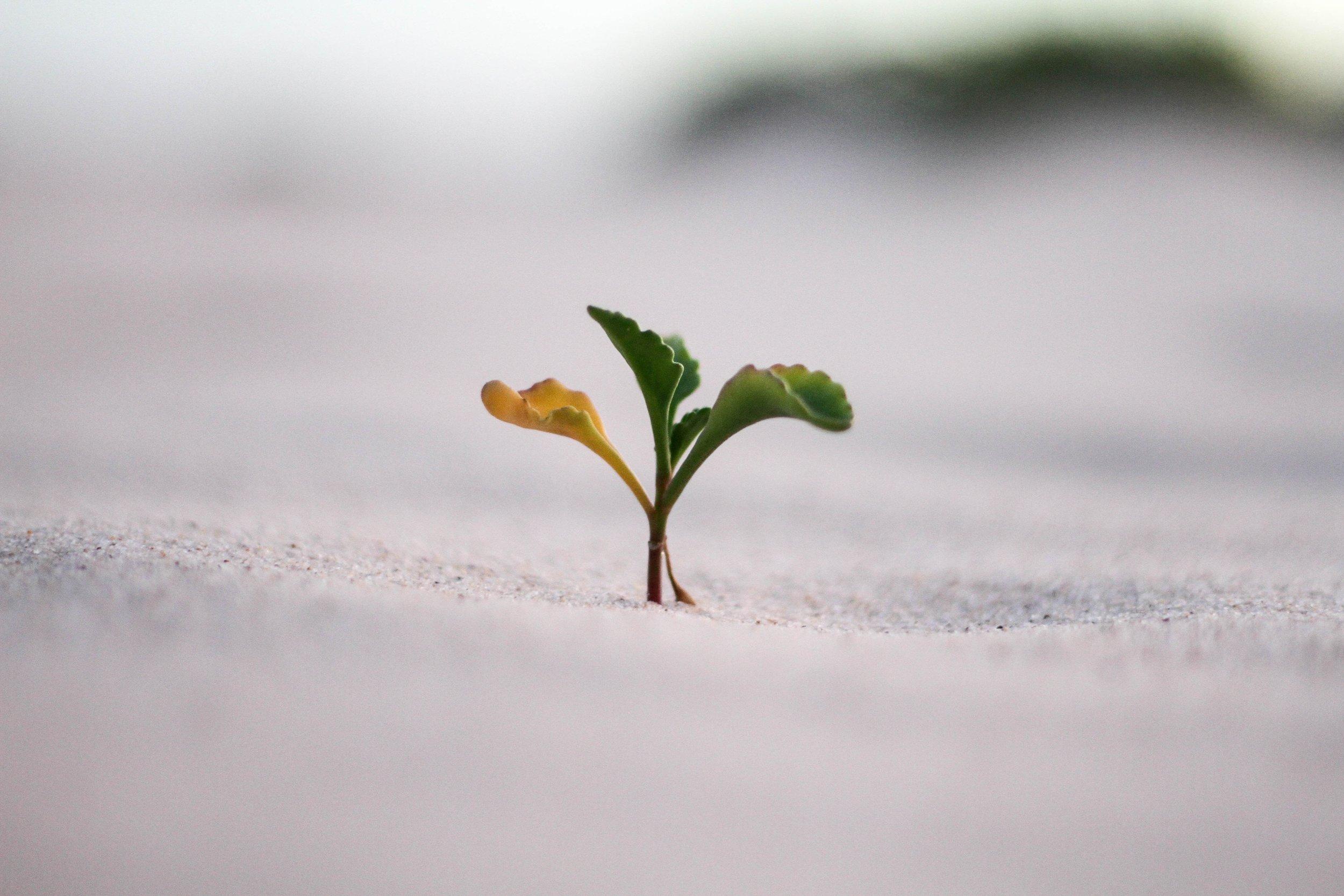 Responsabilidade ambiental é o nosso negócio. -