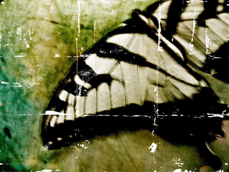 Fragmented 3 (Monarch Butterfly)
