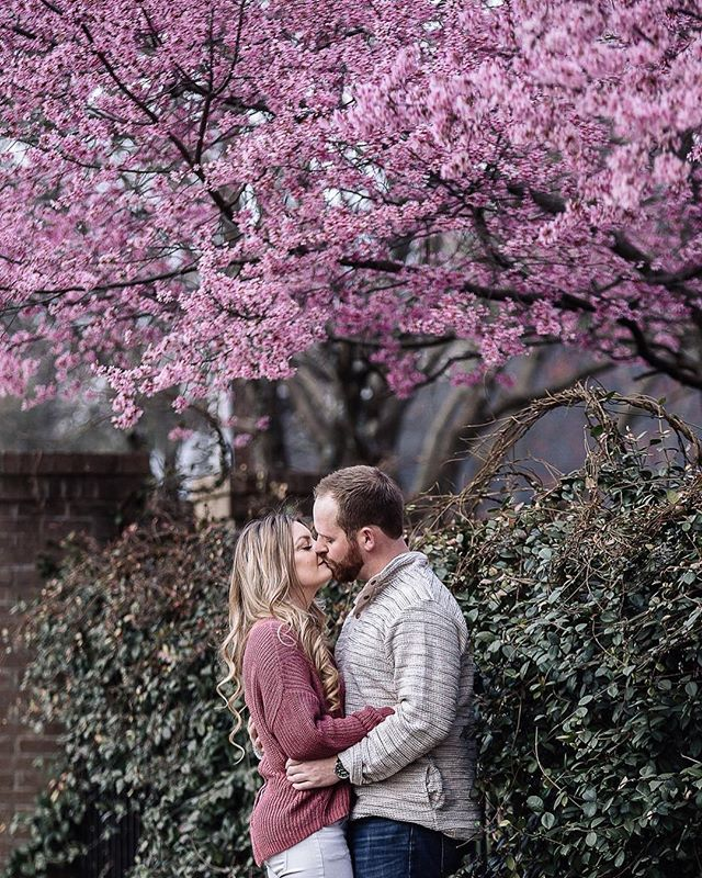 Is this gorgeous weather and all the blooms giving anyone else all the feels today or is it just me? I slept with the windows open and enjoyed the heck out of it! Here's to Monday and great weather! Everyone have the best day possible! . . . . . #mondaymotivation #springtime #springfeels #springengagementsession #engaged #charlotteweddingphotographer #northcarolinaweddingphotographer #amandamossphotography #gettingmarried #springblooms #flowerstagram #bloom #kisses #happyspring #charlotte #charlottecouple #bridetobe #shesaidyes #fiance #happymonday #photooftheday #follow