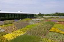 Green_Roof_Garden_wiki.jpeg