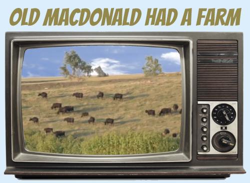 Website-tv-oldmacdonald.jpg