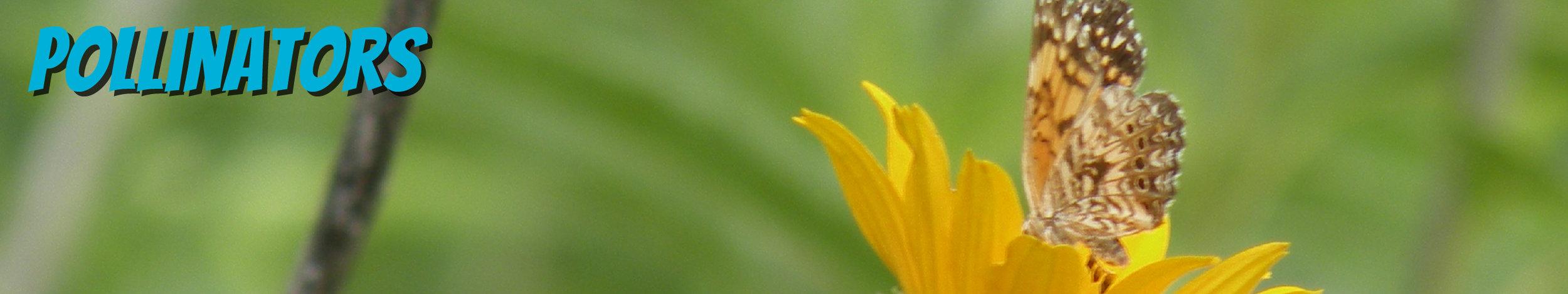 LATI-PollinatorsText-01.jpg