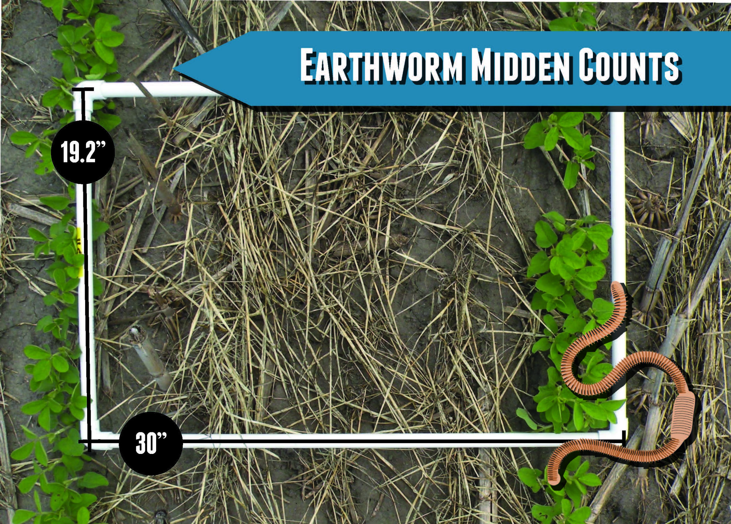 EarthwormMiddenPostcard_Page_2.jpg