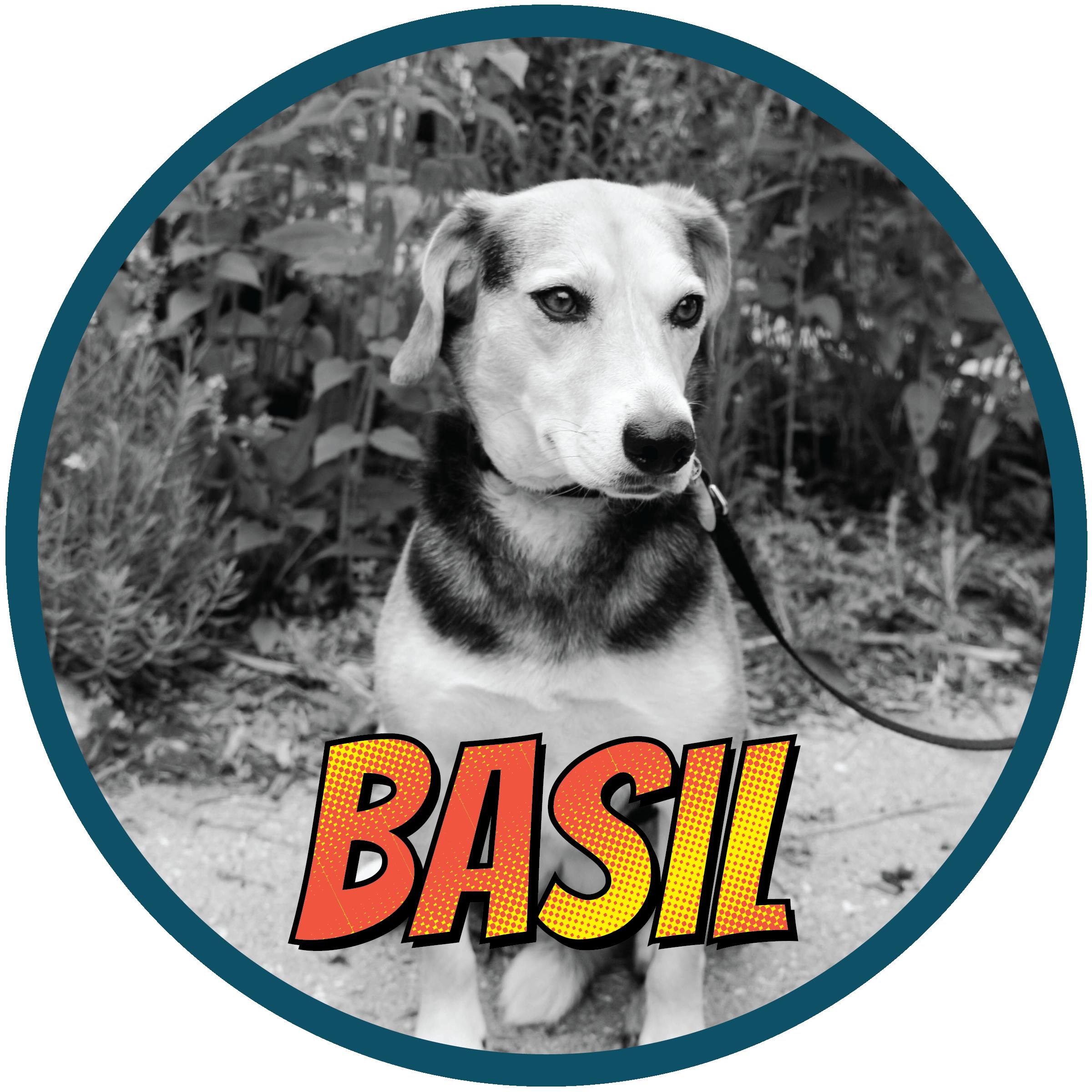 Basil(profile)-01.png