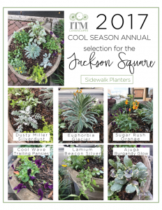 Cool-Season-Annuals-sidewalk-planters-232x300.png