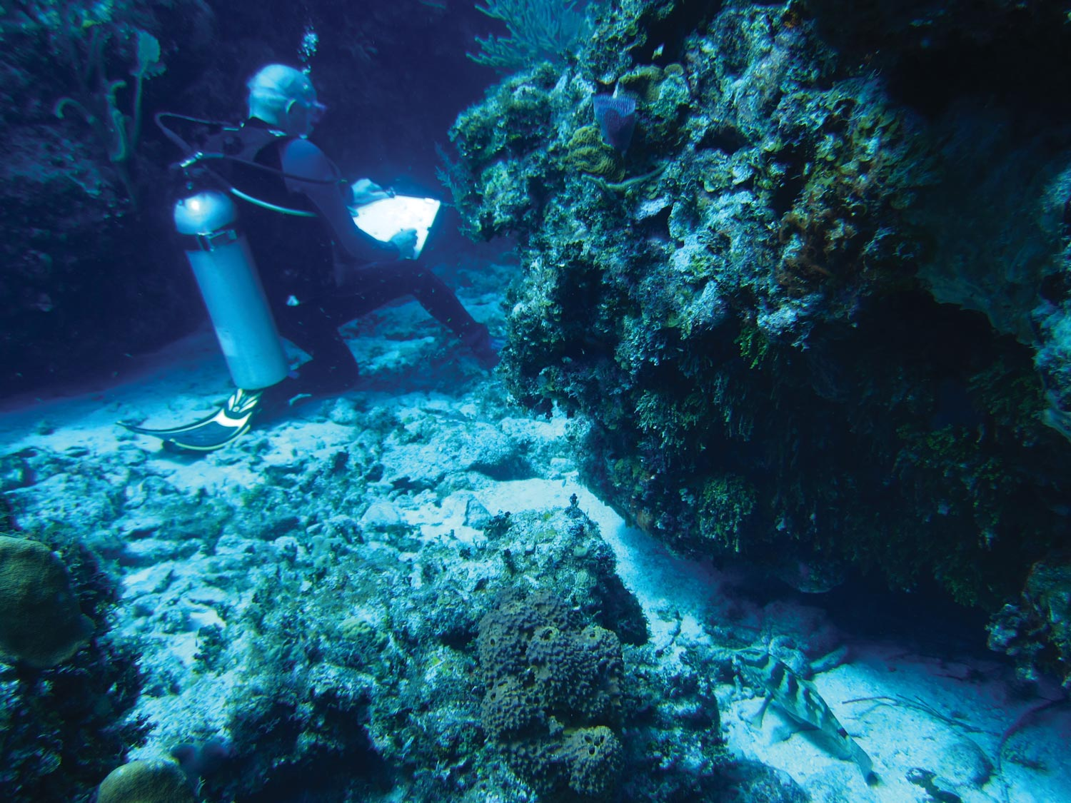 Tony Foster drawing underwater in Little Cayman, Cayman Islands, November 2013. Photo by Laurie Cullenward
