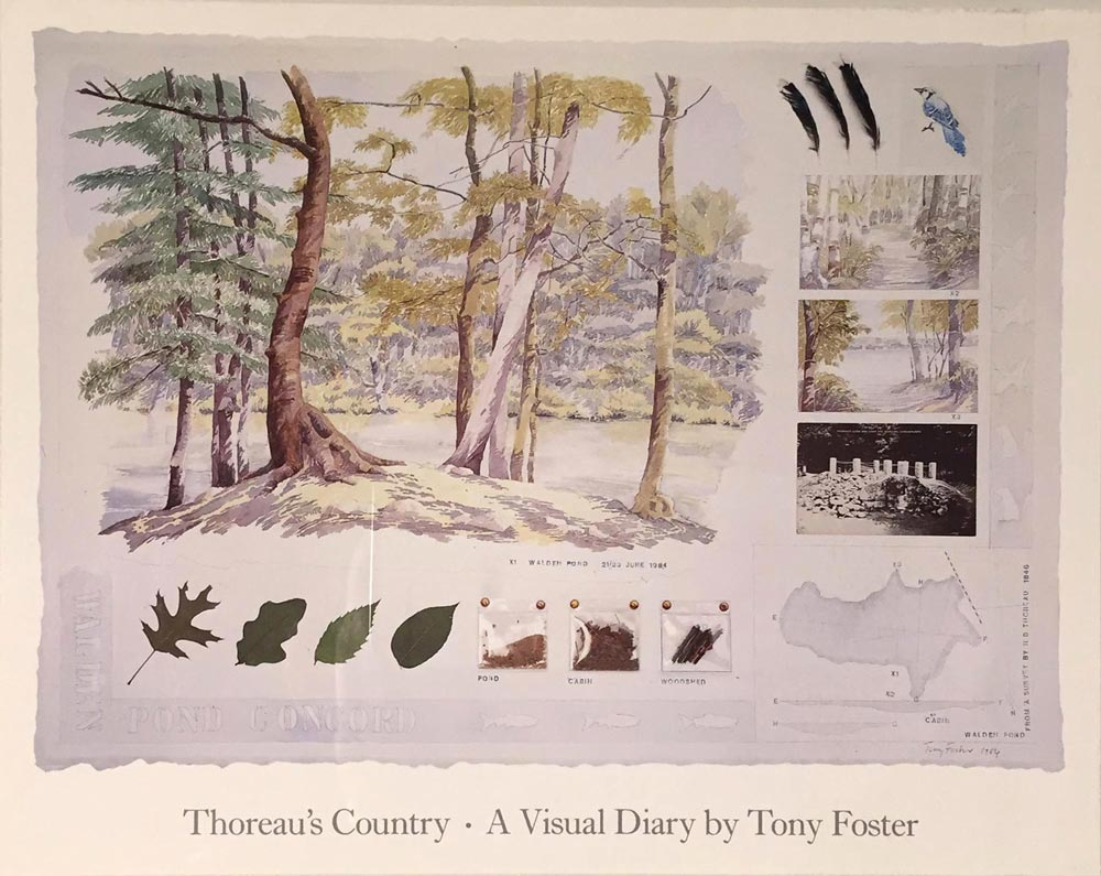 Thoreau's Country: Walks and Canoe Journeys in New England , 1985