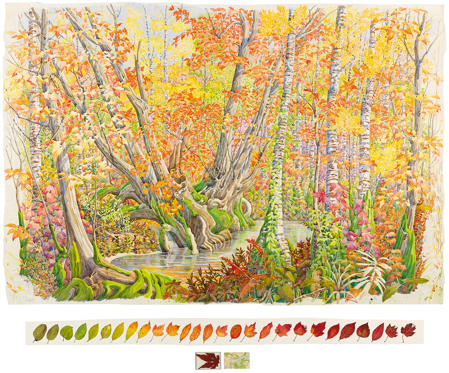 Tony Foster,  Fall Colour in Great Meadow, Concord , 2012. Watercolor and graphite on paper, maple leaf, acrylic box, map. 36 x 52 3/4 in. | 3 3/8 x 47 5/8 in. Photo by Trevor Burrows Photography. Courtesy of Foster Art & Wilderness Foundation.